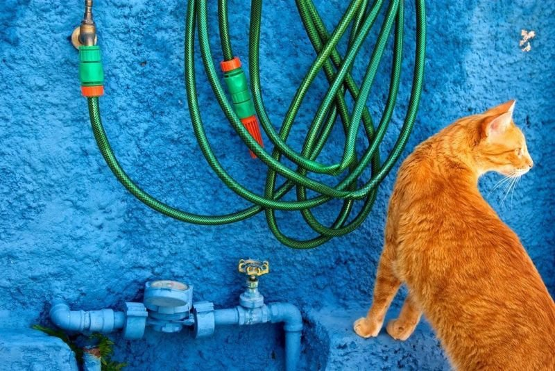 Reasons You Should Invest in a Heated Water Hose
