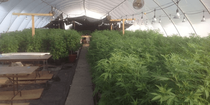 North Carolina Farmers Embrace Hemp as the Market for Tobacco Dwindles