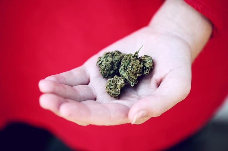 cannabisconsultantguides