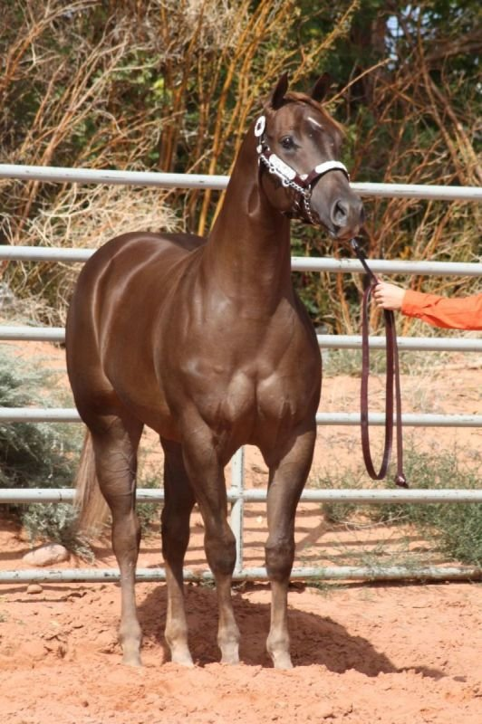 ACool Filly