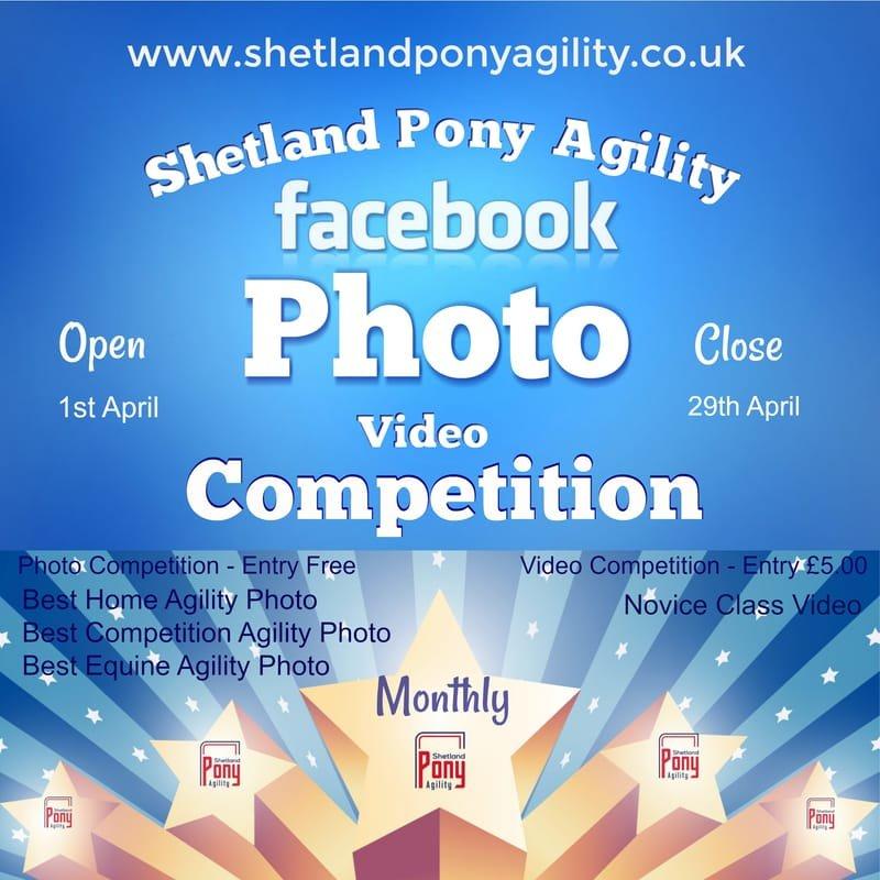 Shetland Pony Agility Photo and Video Competion