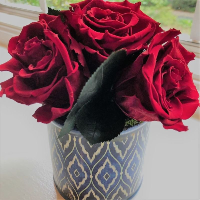 127 Preserved Red Roses in small vase