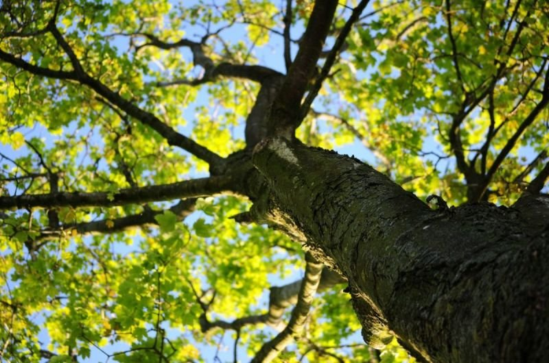 Considerations to Make When Choosing the Best Tree Services Provider