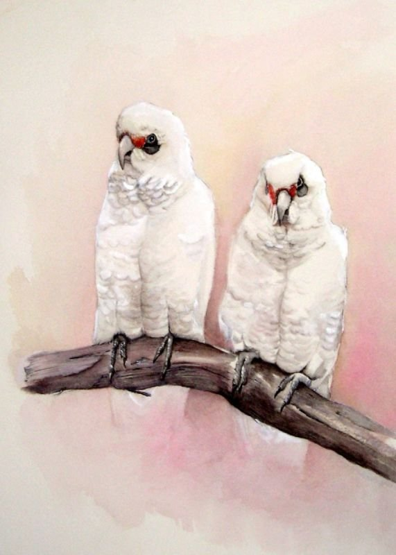 Little Corellas - Watercolour SOLD