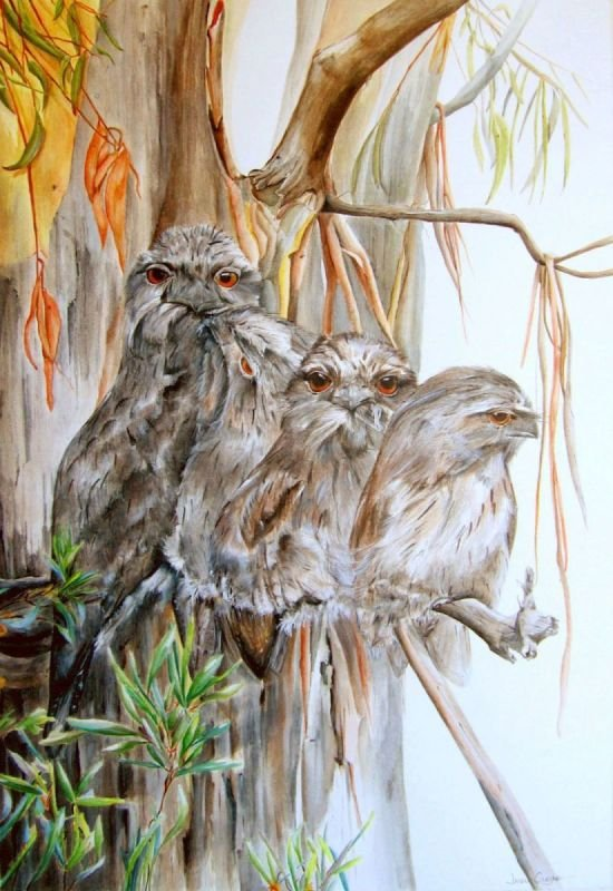 Tawny Frogmouth Series - Watercolour SOLD