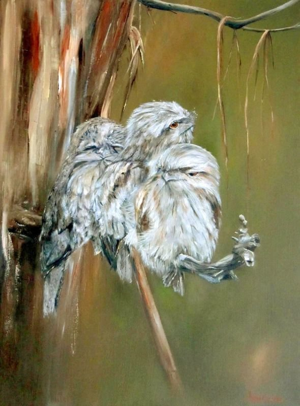 Tawny Frogmouth Series - Oil Painting SOLD