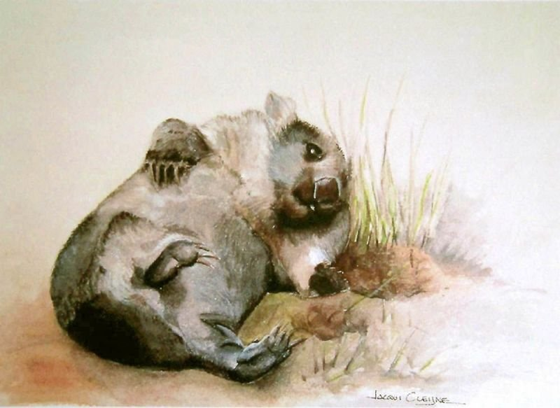 Cheeky Wombat - Watercolour SOLD