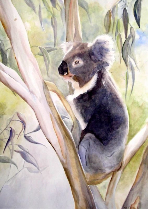 Peaceful Koala