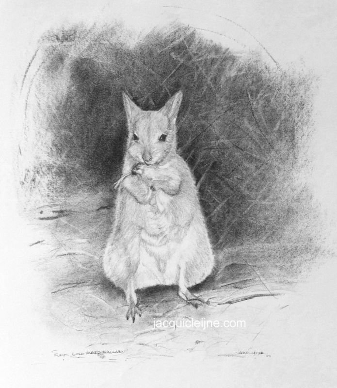 Rufus hare Wallaby