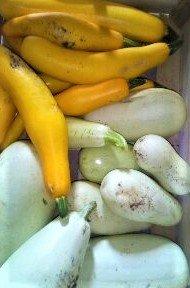 Courgette jaune et blanche