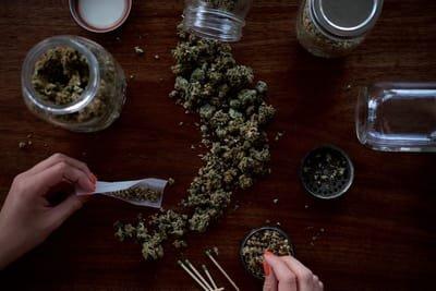 topcannabisguide