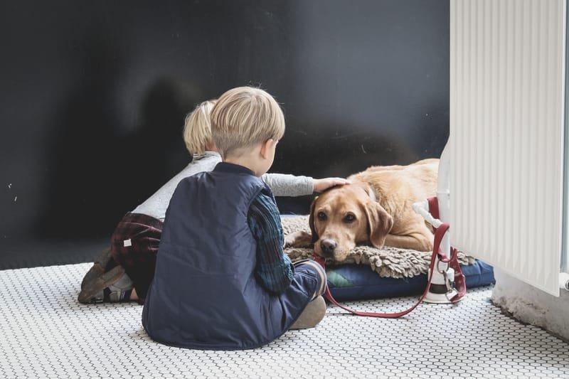 טיפול רגשי בעזרת בעלי חיים לילדים בתל אביב