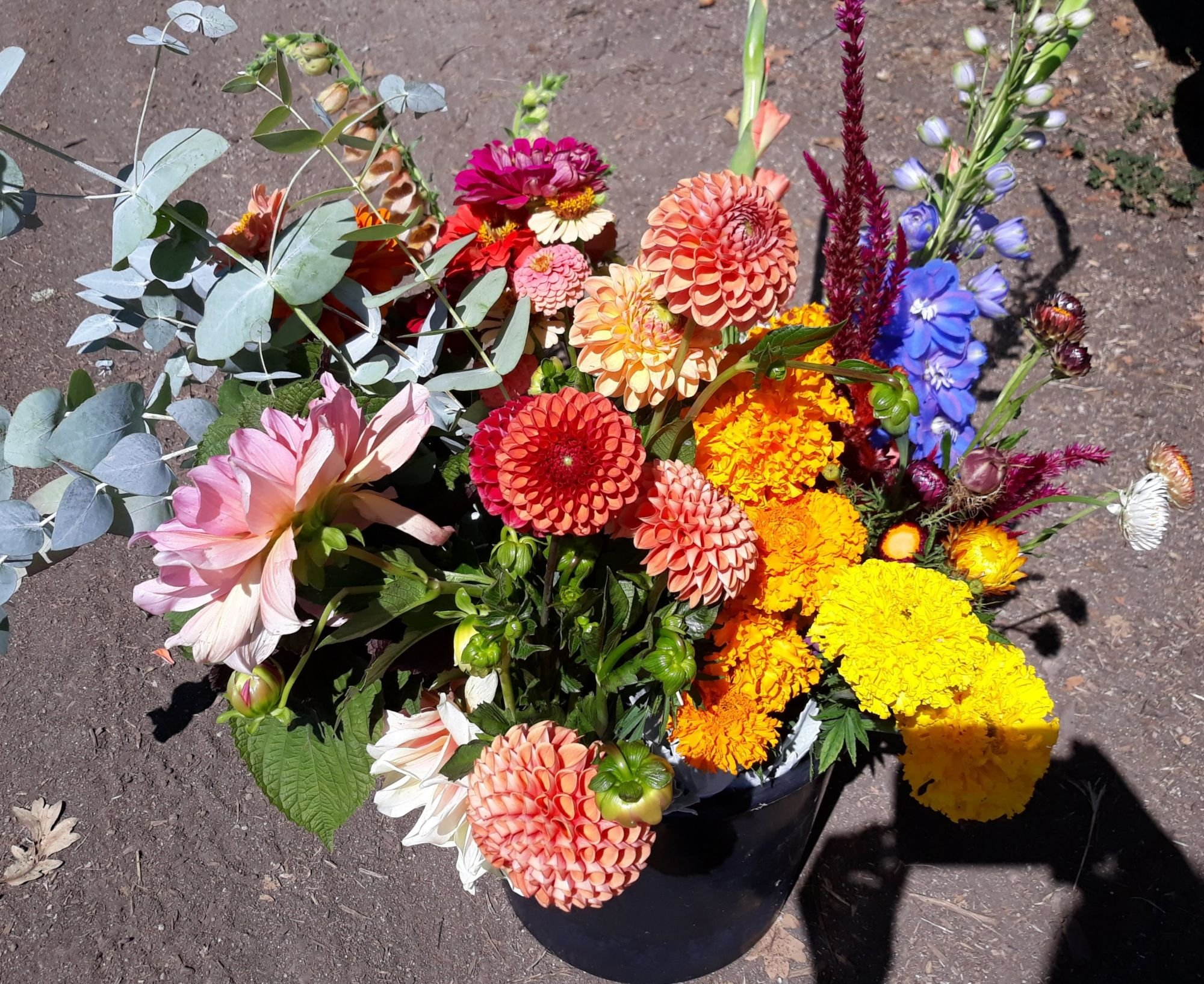 Flower Csa Ashland Waterleaf Flower Farm Design Studio