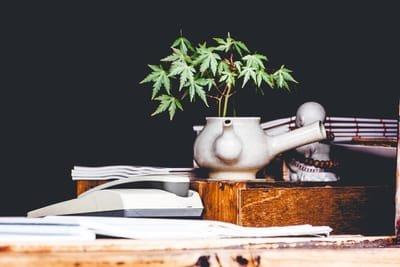 cannabiscompanies