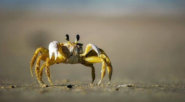 Articles - Blue Crabs Supplier