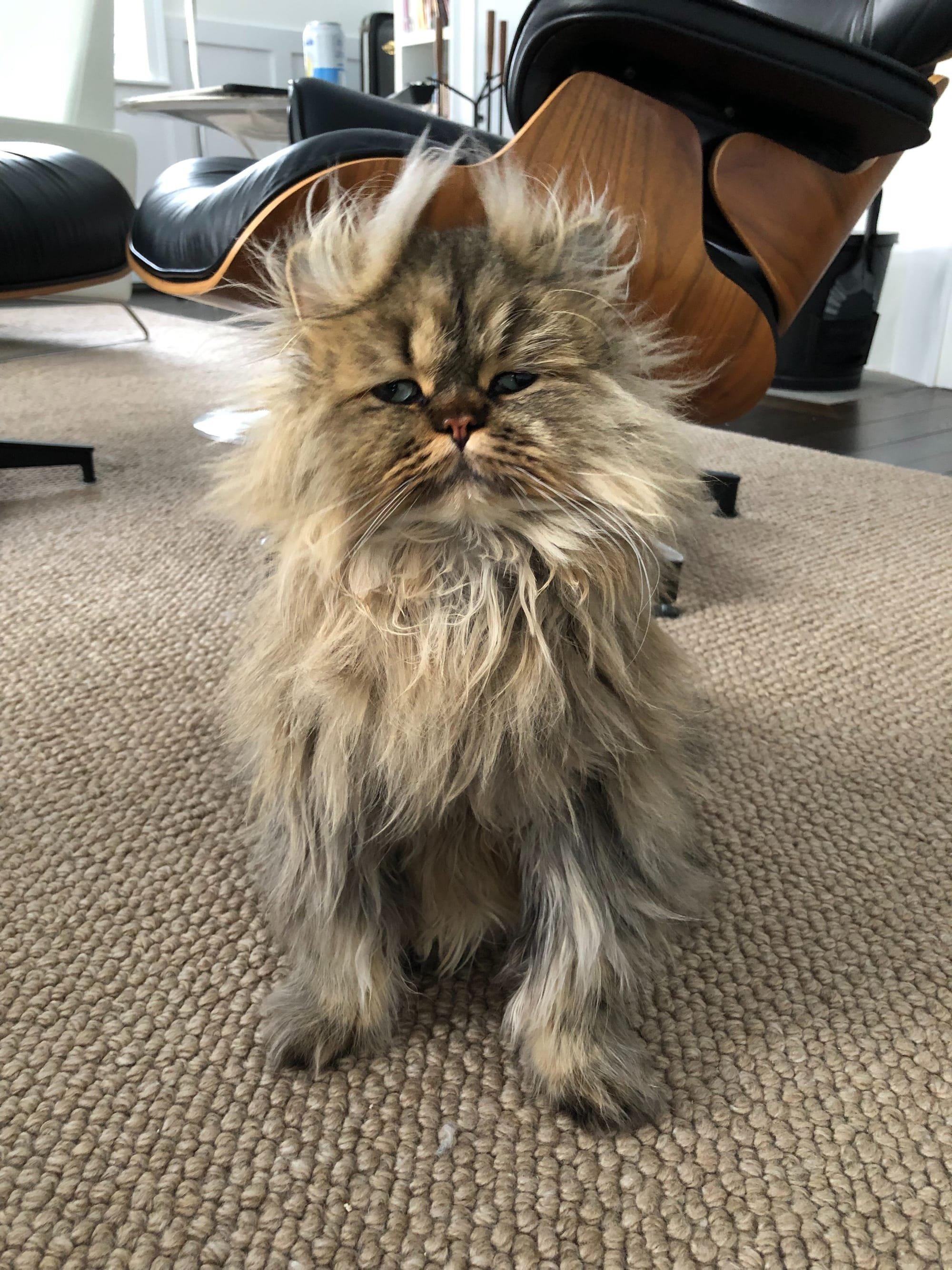 Barnaby the cat