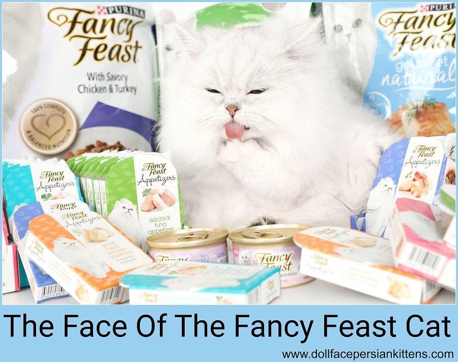 Fancy Feast Cattery