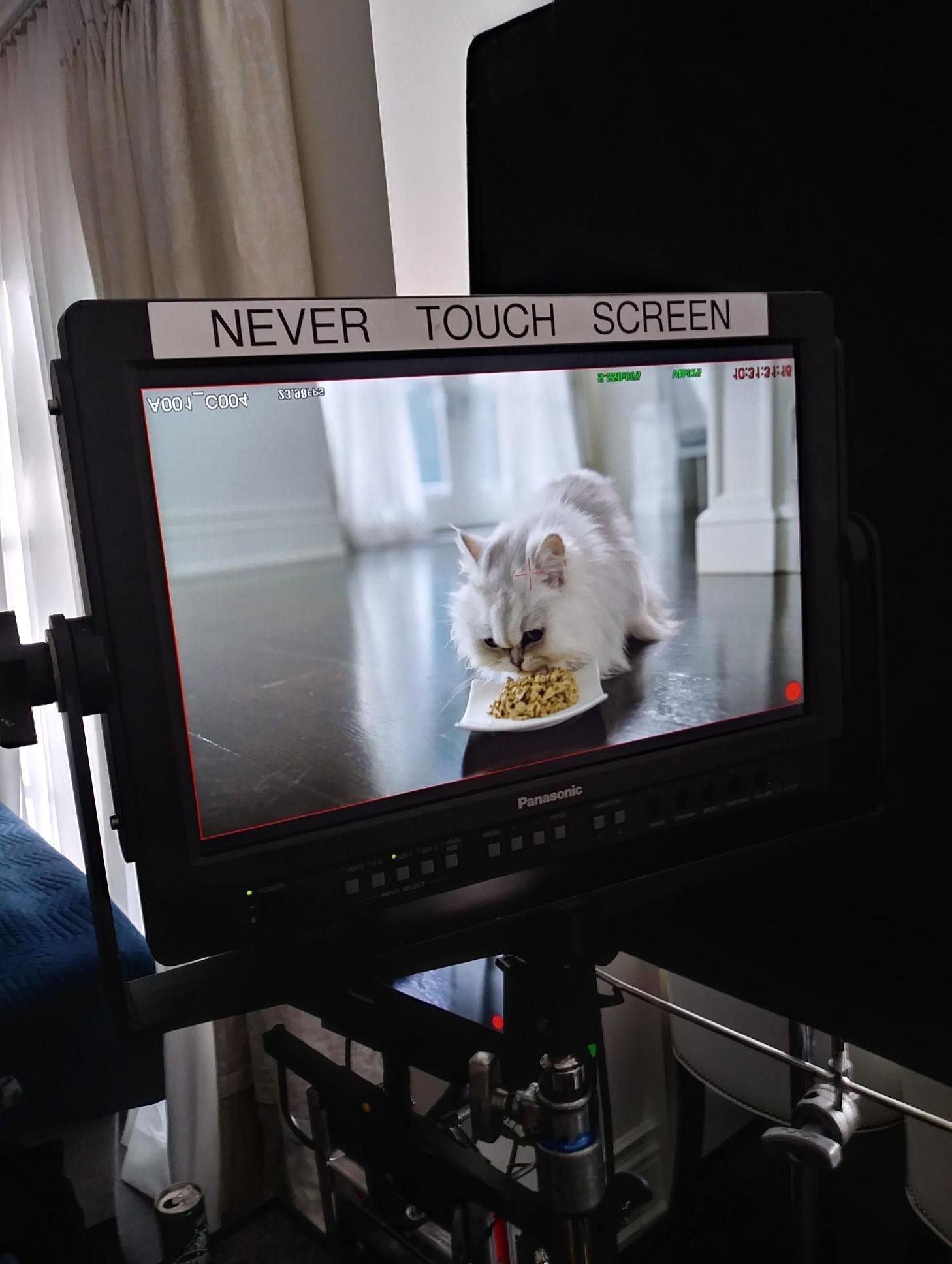 The Fancy Feast Cat