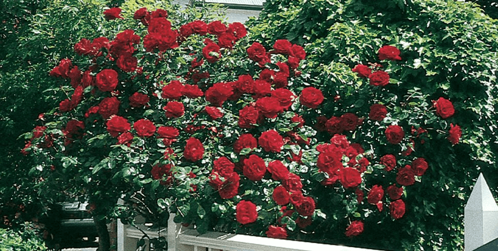 How To Get The Best From Your Roses Hills View Landscape Products