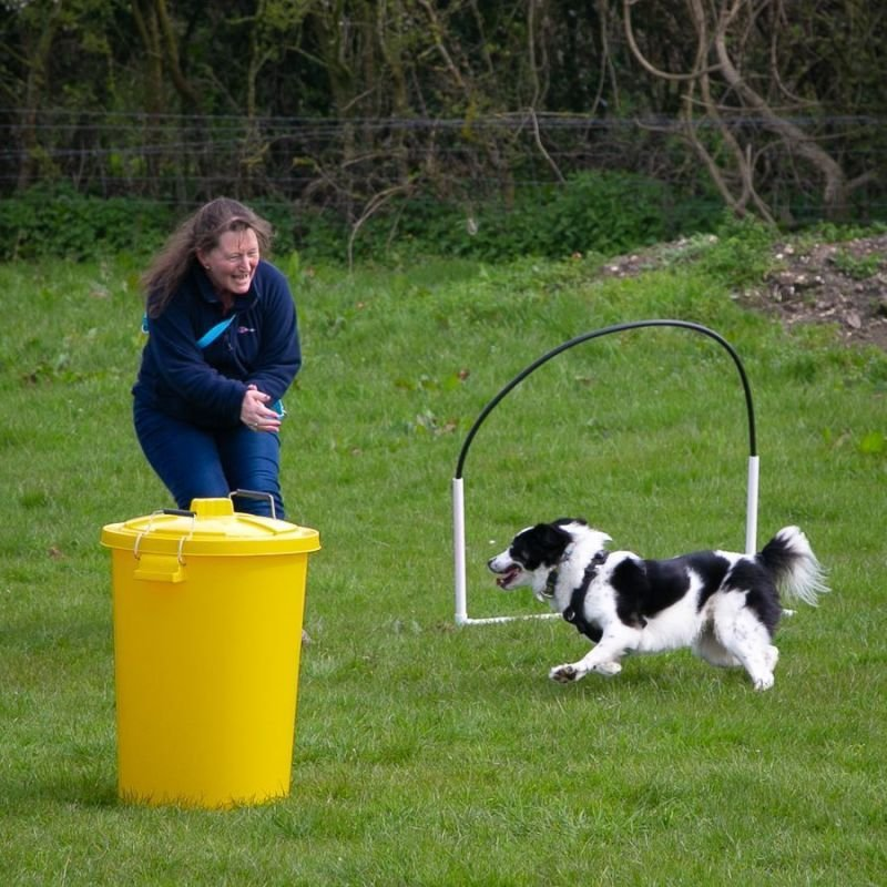About Allsorts Dog Training
