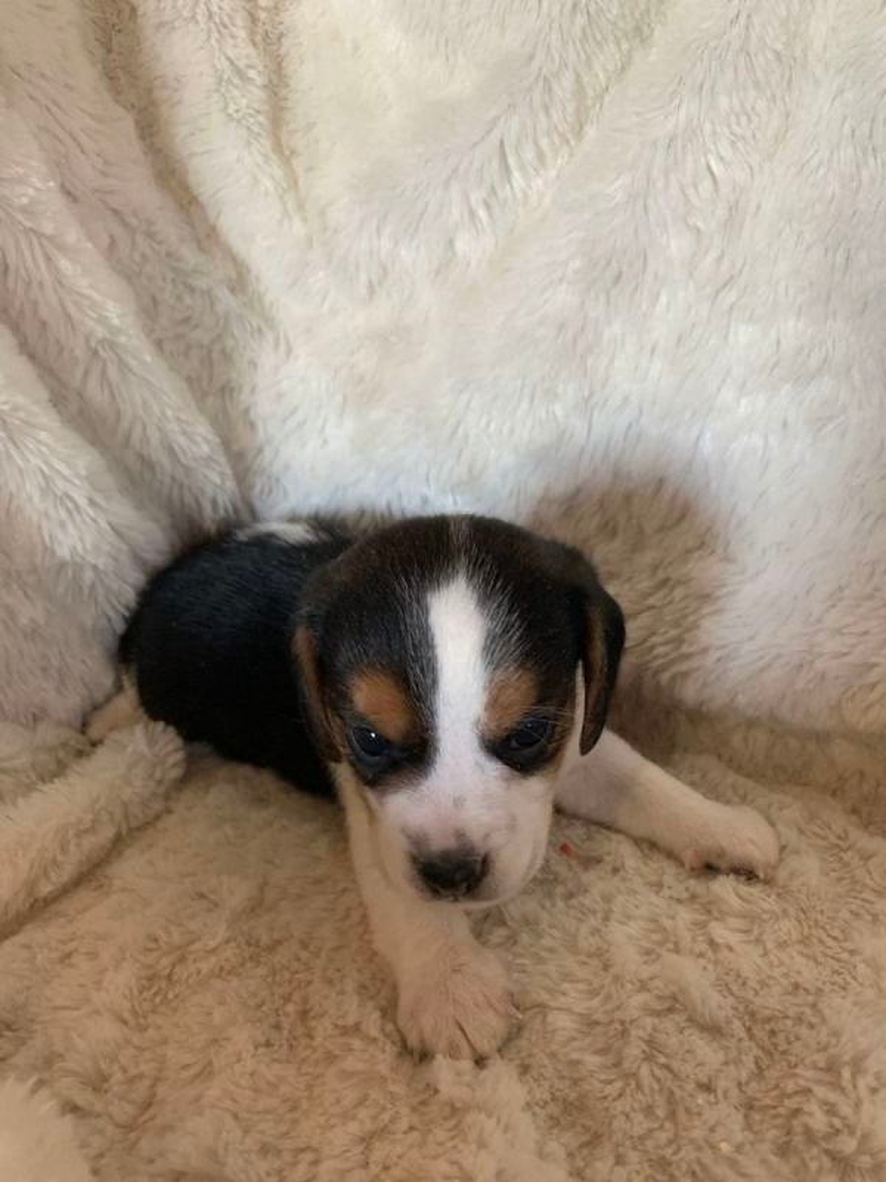 Stella Pup #3
