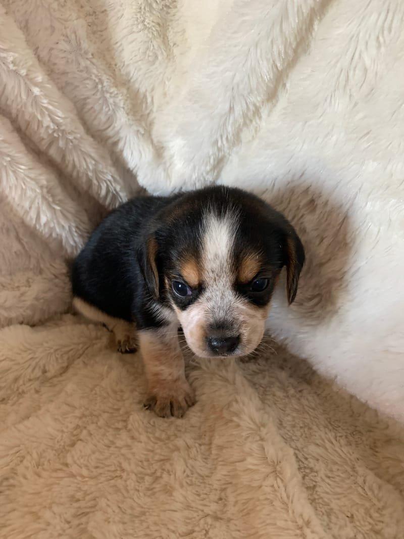 Sally Pup #3