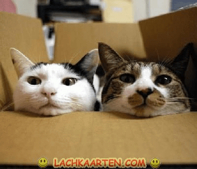 2 poezen in een doos
