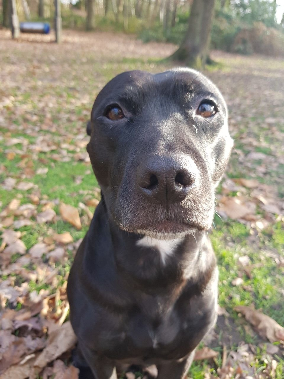 Dog walker Bracknell