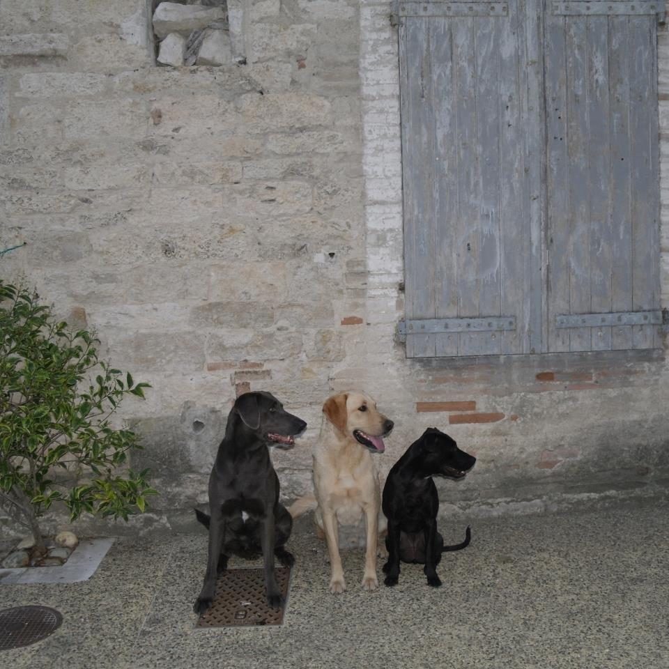 dog daycare Bracknell
