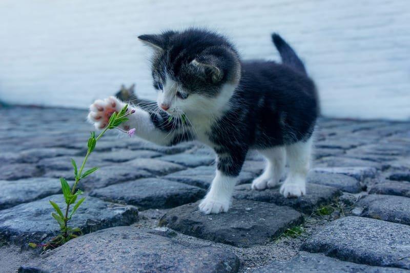 Pet Repatterning