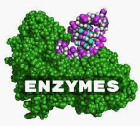 BIYOZIM Enzyme