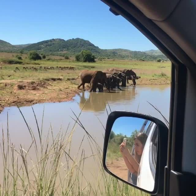 Elephants while on Safari in Pilanesberg national Park