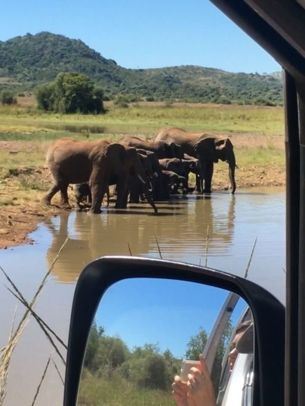 Pilanesberg Safari Tour