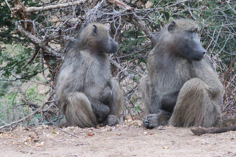 Pilanesberg Safari -Big6 Safaris