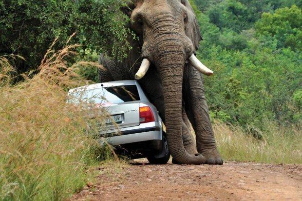 Pilanesberg national park Big6 Safaris