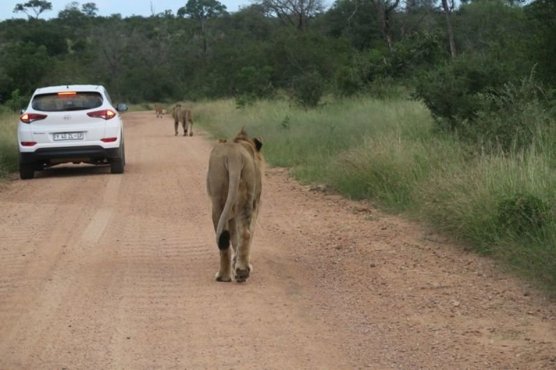 Pilanesberg Safaris - Big6 Safaris