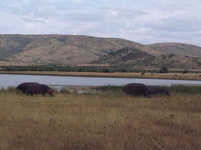 Pilanesberg National Park Day Safaris - Big6 Safaris
