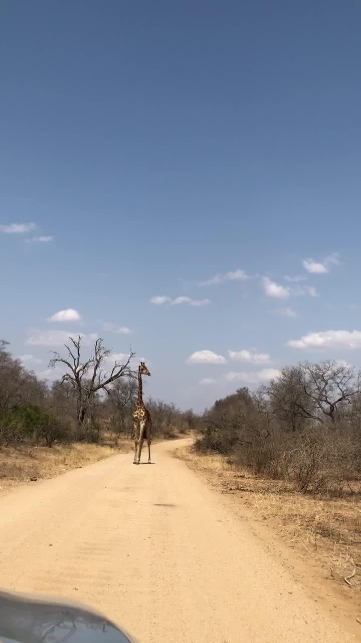 Pilanesberg Game Reserve - Big6 Safaris