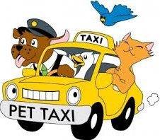Pet Taxi Costs