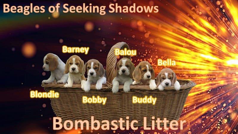 Bombastic Puppies