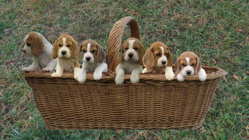 Nationales Hundehalterbrevet Theorie