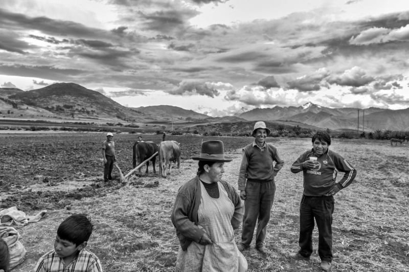 THE SUNLESS FLOWERS OF PERU