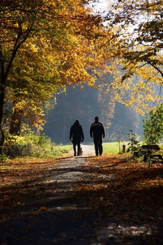 Walking Therapy