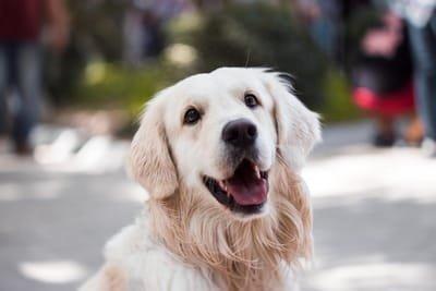 dogbreedingservices
