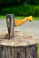 Factors to Consider when Picking a Tree Removal Firm