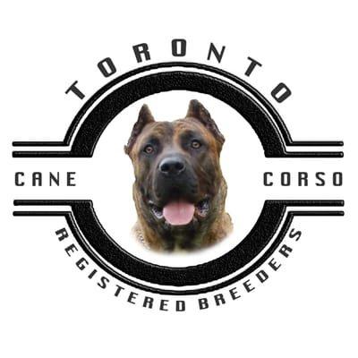 TORONTO CANE CORSO