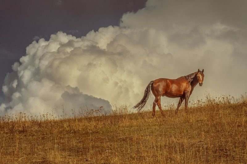 Cloud and Horse in Pose