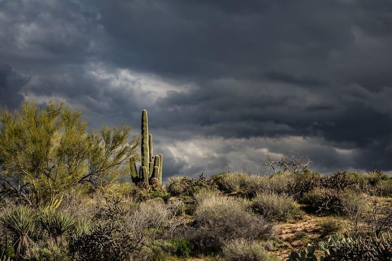 Sonoran Sky