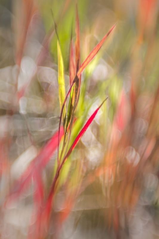 Stained Grass