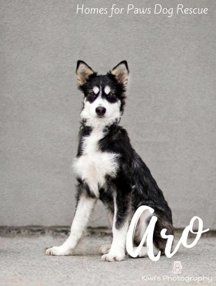 Aro now Oreo